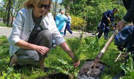 Кедровый гектар: студенты ВГУЭС высадили кедры в детской клинической больнице